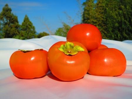 【富有柿のドライフルーツ】おまとめセット【人気商品】